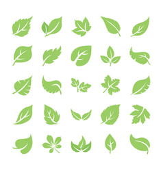 Leaf flat icons vector