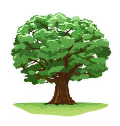 magic oak tree isolated vector image