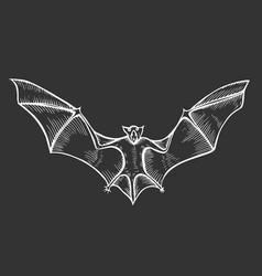screaming flying bat vector image