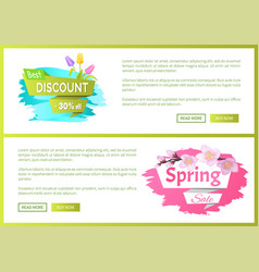 spring sale advertisement label branch of sakura vector image