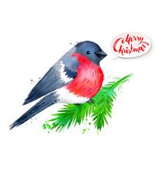 christmas watercolor of bullfinch vector image