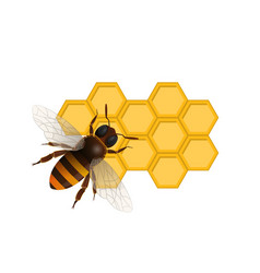 Organic sweet nutrition symbol with honeybee vector