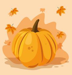 Pumpkin vegetable design vector