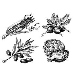 Vegetables set isolated drawings black over white vector