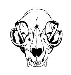 White animal skull anatomical correct vector