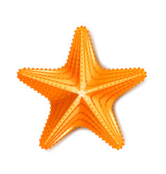 starfish isolated on white vector image vector image