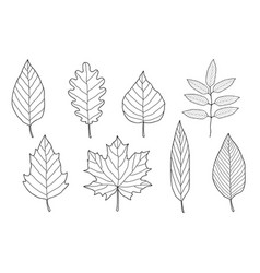set of hand drawn leaves vector image vector image