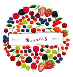 the berry vector image