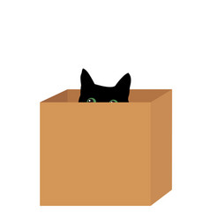 black cat in a box vector image vector image