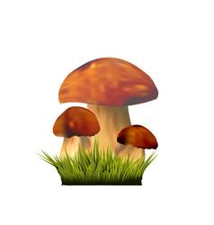 Edible mushrooms on grass vector