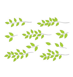 Tree branches with green leaves vector