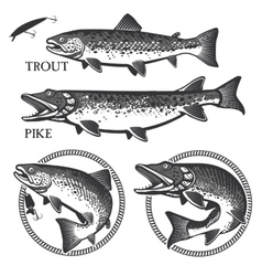 Vintage trout fishing emblems labels and design vector