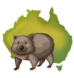 Wombat and Australia map vector