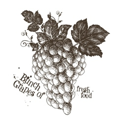 grapes logo design template fruit or fresh vector image vector image