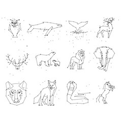 collection of animals constellation on white vector image