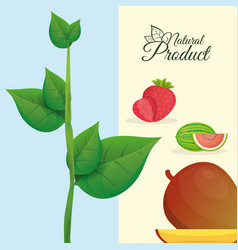 Natural product fruit poster vector