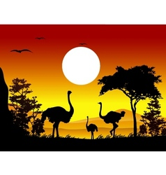 ostrich silhouettes with landscape background vector image