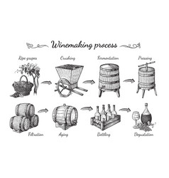 process wine production vector image