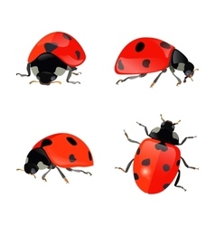 Set of hand drawn ladybugs ladybirds vector