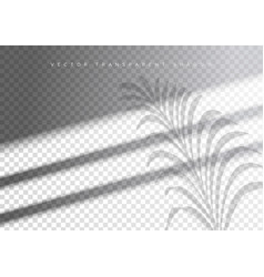 The transparent shadow overlay effect tropic leaf vector