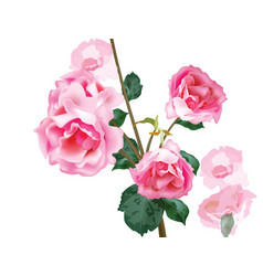 watercolor vintage roses bouquet floral vector image vector image