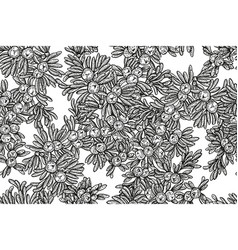 juniper tree seamless pattern hand drawn vector image vector image