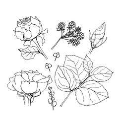set of elements of roses and vector image vector image