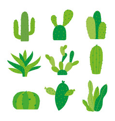 cactus icon flat design plants pot cartoon vector image
