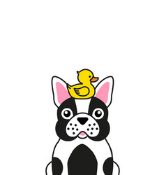 cute french bulldog with yellow rubber duck vector image