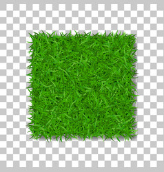 Grass square 3d beautiful green grassy field vector