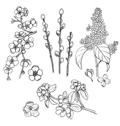Hand drawn spring natural collection vector