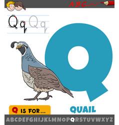 Letter q from alphabet with quail bird animal vector