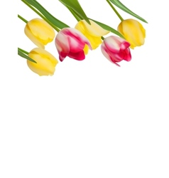 Tulips design template or background EPS 8 vector image