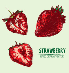 digital detailed color strawberry vector image