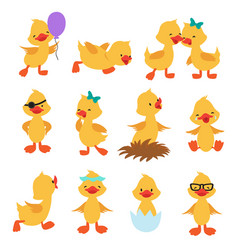 Cartoon cute ducks little baby yellow chick vector