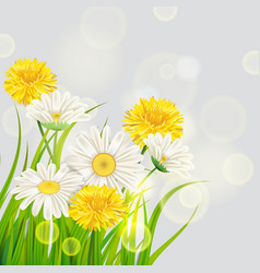 Fresh spring juicy chamomile and dandelions vector