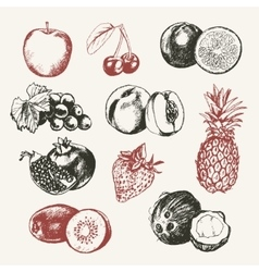 Fruits - modern hand drawn design vector image