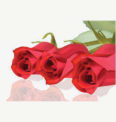 Realistic red roses bouquet beautiful flowers vector