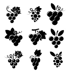 Icons of grapes vector
