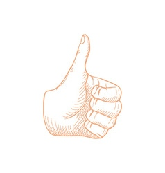 Hand Drawn Thumbs up vector image