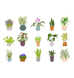 houseplants in pots set botanical collection vector image