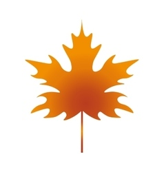Leaf Maple vector image