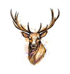 portrait of a deer head from a splash of vector image