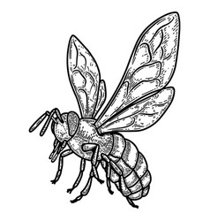 bee in engraving style design element for poster vector image
