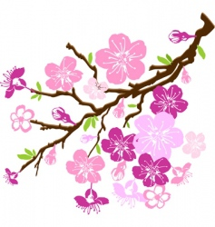 Branch of the cherry blossoms vector