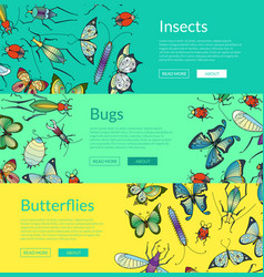 Hand drawn insects of set colored vector