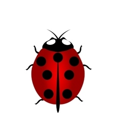 Ladybird icon red ladybug vector
