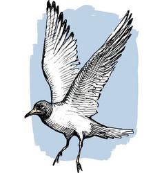 Sketch a flying gull vector