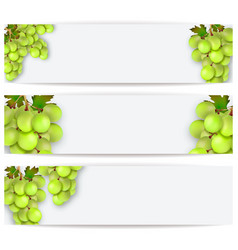 cards or labels with realistic grapes vector image