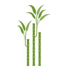 lucky bamboo vector image